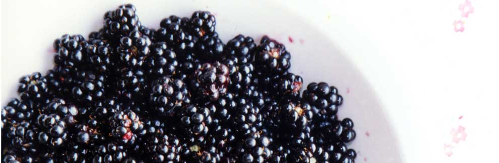 blackberries01.jpg